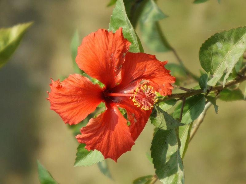 Small Flower at Killing Fields
